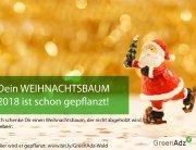 Für einen Euro einen neuen Weihnachtsbaum pflanzen